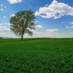 美瑛の「哲学の木」ついに撤去される…所有者が決断