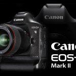 EOS-1D X Mark II vs D5、高感度サンプル比較!