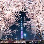 るるぶ.com 桜・お花見フォトコンテスト2016に入賞しました!