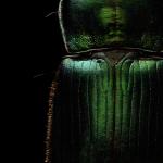 Levon Bissさんの超クオリティ昆虫写真はミクロの芸術!