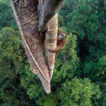 これが世界最高峰動物写真!「ワイルドライフ・フォトグラファー・オブ・ザ・イヤー」2016年の受賞作が発表!