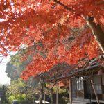 冬のパワースポット巡り!鎌倉&江ノ島へ撮影旅行に行ってきました!<円覚寺編>