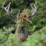 愛らしくてユーモラスな「おもしろ野生動物写真フォトコンテスト」のご紹介!