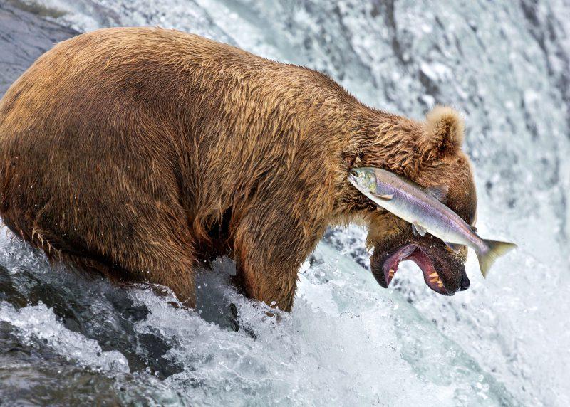 顔に魚がぶつかるかわいいクマ