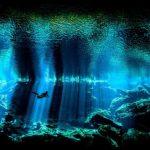 水中写真の極み!アンダーウォーター・フォトグラファー・オブ・ザ・イヤー2017受賞作品が発表!