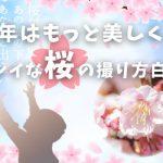 2016年版 今年はもっと美しく!キレイな桜の撮り方白書~22個の秘訣~